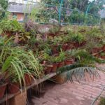 Botany Lab